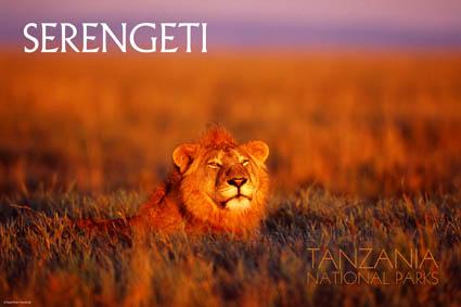 serengetiparc